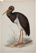 Antiques:Posters & Prints, Edward Lear. Black Stork. Hand-colored lithograph from Gould'sBirds of Europe. Very good....