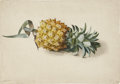 Antiques:Posters & Prints, Anton Hartinger. Pineapple Painting. An original watercolor. Dated1873 in graphite, lower left corner. In very good conditi...