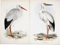 Antiques:Posters & Prints, Edward Lear (1812-1888). Two Prints: White Stork. [and:] MaguariStork.. Two hand-colored lithographs by Edward Lear f... (Total: 2Items)