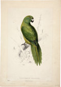 Antiques:Posters & Prints, Edward Lear (1812-1888). Platycercus Unicolor - Uniform Parrakeet..A charming hand-colored lithograph from Lear's Illus...