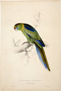 Antiques:Posters & Prints, Edward Lear (1812-1888). Platycercus Barnardi - Barnard'sParrakeet.. A delightful hand-colored lithograph from Lear'sI...
