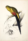 Antiques:Posters & Prints, Edward Lear (1812-1888). Palæornis Melanura - Black-tailedParrakeet.. A wonderful and sharply-detailed hand-colored litho...