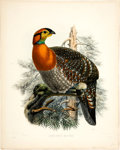 Antiques:Posters & Prints, Daniel Giraud Elliot (1835-1915). Ceriornis Blythii.. A wonderful hand-colored lithograph from Elliot's Monograph of the...
