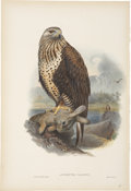 Antiques:Posters & Prints, John Gould (1804-1881). Archibuteo Lagopus.. A hand-colored lithograph of the Rough-Legged Buzzard from Gould's Birds of...