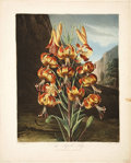 Antiques:Posters & Prints, Robert John Thornton (ca. 1768-1837). Two Flower Prints: The SuperbLily. [and:] The White Lily.... (Total: 2 Items)