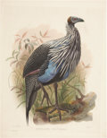 Antiques:Posters & Prints, Daniel Giraud Elliot (1835-1915). Acryllium Vulturina.. An exotic hand-colored lithograph from Elliot's Monograph of the...