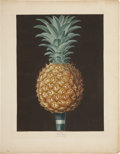 Antiques:Posters & Prints, George Brookshaw (1751-1823). Black Antigua - Plate LV.. A fabulousaquatint engraving of a pineapple, with some hand-colo...