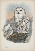 Antiques:Posters & Prints, John Gould (1804-1881). Nyctea Nivea.. Hand-colored lithograph fromGould's Birds of Great Britain (London: 1862-1873)...