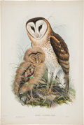 Antiques:Posters & Prints, John Gould (1804-1881). Strix Candida.. Hand-colored lithographfrom Gould's Birds of Australia (London: 1840-1869)....