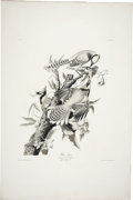 Antiques:Posters & Prints, John James Audubon (1785-1851). Blue Jay - Plate CII - Uncolored Original Proof (Havell Edition).. A striking uncolored or...