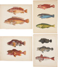 Antiques:Posters & Prints, [M. C. Perry] Four Chromolithograph Illustrations of Various FishFrom Admiral Perry's Expedition to Japan. 11 x 8.5 inches...(Total: 4 Items)