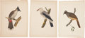 Antiques:Posters & Prints, [M. C. Perry] Three Chromolithograph Illustrations of Various BirdsFrom Admiral Perry's Expedition to Japan. 8.5 x 11 inch... (Total:3 Items)