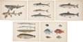 Antiques:Posters & Prints, [M. C. Perry] Five Chromolithograph Illustrations of Various FishFrom Admiral Perry's Expedition to Japan. 11 x 8.5 inches...(Total: 5 Items)