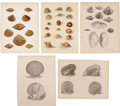 Antiques:Posters & Prints, [M. C. Perry] Five Lithograph Illustrations of Mollusk Shells FromPerry's Expedition to Japan. 8.5 x 11 inches.... (Total: 5 Items)