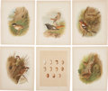 Antiques:Posters & Prints, [Grönvold] Six Chromolithograph Illustrations of Birds. 11.25 x 8.75 inches. Extracted from Birds of Great Britain and Ire... (Total: 6 Items)
