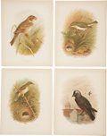 Antiques:Posters & Prints, [Grönvold] Four Chromolithograph Illustrations of Birds. 8.75 x11.25 inches. Includes beautiful color illustrations of the ...(Total: 4 Items)