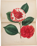 Books:Non-fiction, Joseph Paxton. Paxton's Magazine of Botany, and Register ofFlowering Plants. London: Orr and Smith, 1834-1849.. C...(Total: 16 Items)