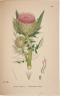 Books:Non-fiction, John Edward Sowerby. English Botany; or, Coloured Figures of British Plants. London: George Bell and Sons, 1887-... (Total: 13 Items)