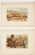 Antiques:Posters & Prints, Collection of Four 19th Century Illustrations of Sea Mammals. 9.5 x 12.5 inches. A collection of illustrations including 2 m... (Total: 4 Items)