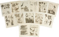 Antiques:Posters & Prints, Lot of 13 Antique Copperplate Engravings Featuring Animals, Birdsand Fish. Plate size measures 7 x 8.5 inches with an overa...(Total: 13 Items)