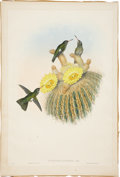 Antiques:Posters & Prints, John Gould (1804-1881). Phæoptila Sordida.. A striking hand-coloredlithograph from Gould's Monograph of the Trochilidæ,...