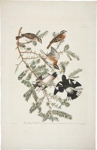 John James Audubon (1785-1851). Rose-breasted Grosbeak - Plate CXXVII (Havell Edition).  A lovely hand-colored