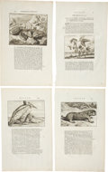 Antiques:Posters & Prints, Cornelis de Bruin: Four Ca. 1711 Copper Engraved Illustrations of Plant and Animal Life. Various plate sizes, 9.5 x 16 inche... (Total: 4 Items)
