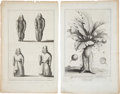 Antiques:Posters & Prints, Exceptional Botanical Copper Engraved Prints of the Infamous Mandrake Plant, Circa 1725. 10 inches x 15.5 inches.... (Total: 2 Items)