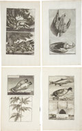 Antiques:Posters & Prints, Cornelis de Bruin: Four Ca. 1711 Copper Engraved Illustrations ofBirds and Fish. Various plate sizes, 9.5 x 16 inches overa...(Total: 4 Items)