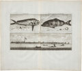 Antiques:Posters & Prints, Cornelis de Bruin Copper Engraving of Fish From the Waters Off Cochin. Plate size 14.5 x 9 inches, 18.5 x 16 inches overall....