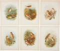 Antiques:Posters & Prints, [Grönvold] Six Chromolithograph Illustrations of Birds. 11.25 x8.75 inches. From Birds of Great Britain and Ireland,...(Total: 6 Items)