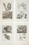 Antiques:Posters & Prints, Cornelis de Bruin: Four Ca. 1711 Copper Engraved Illustrations ofPlants and Trees. Various plate sizes, 9.5 x 16 inches ove...(Total: 4 Items)