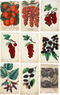 Antiques:Posters & Prints, Lot of Nine Chromolithograph Illustrations of MiscellaneousBerries. About 5.25 x 8.5 inches. From Dewey's Pocket Series, co...(Total: 9 Items)