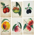 Antiques:Posters & Prints, Lot of Six Chromolithograph Illustrations of Various Peach and PlumVarieties. Each about 5.25 x 8.5 inches. From Dewey's Po... (Total:6 Items)