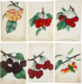 Antiques:Posters & Prints, Lot of Six Chromolithograph Illustrations of Various CherryVarieties. Each about 5.25 x 8.5 inches. From Dewey's Pocket Ser...(Total: 6 Items)