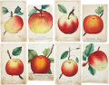 Antiques:Posters & Prints, Lot of Eight Chromolithograph Illustrations of Various AppleVarieties. Each about 5.25 x 8.5 inches. From Dewey's Pocket Se...(Total: 8 Items)