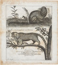 Antiques:Posters & Prints, Copperplate Engraving of an Ethiopian Marmoset. 12.5 x 14 inches. Scattered moderate foxing, especially along the edges, el...