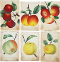Antiques:Posters & Prints, Lot of Six Chromolithograph Illustrations of Various AppleVarieties. Each about 5.25 x 8.5 inches. From Dewey's PocketSeri... (Total: 6 Items)