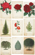 Antiques:Posters & Prints, Lot of Nine Chromolithograph Illustrations of Miscellaneous Treesand Flowers. About 5.25 x 8.5 inches. From Dewey's Pocket ...(Total: 9 Items)
