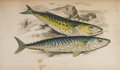 Books:Non-fiction, Jonathan Couch. A History of the Fishes of the BritishIslands. London: Groombridge and Sons, 1862-1865. Complet...(Total: 4 Items)