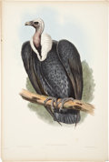 Antiques:Posters & Prints, John Gould (1804-1881). Three Prints: Gyps Bengalensis. [and:]Cinereus Vulture (drawn by Edward Lear). [and:] ... (Total: 3Items)