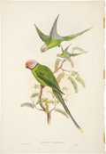 Antiques:Posters & Prints, John Gould (1804-1881). Two Prints: Palæornis Cyanocephala. [and:]Prioniturus Discosurus.... (Total: 2 Items)