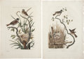 Antiques:Posters & Prints, Cornelius Nozeman (1721-1786). Three Prints: Fringilla Schoeniclus.[and:] Parus Palustris.[and:] Lanius Collyrio.... (Total: 3 Items)