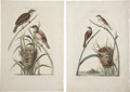 Antiques:Posters & Prints, Cornelius Nozeman (1721-1786). Four Prints: Turdus, junco. [and:]Turdus, Calamoxenus. [and:] Turdus, junco, minor. ... (Total: 4Items)