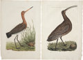 Antiques:Posters & Prints, Cornelius Nozeman (1721-1786). Three Prints: Rusticola. [and:]Scolopax, Arquata, Numenius. [and:] Ardeola.... (Total: 3 Items)