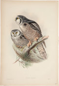 Antiques:Posters & Prints, John Gould (1804-1881). Three Prints: Surnia Funerea. [and:] ScopsZorca. [and:] Nyctale Tengmalmi.... (Total: 3 Items)