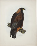 Antiques:Posters & Prints, Prideaux John Selby (1788-1867). Golden Eagle Female - Plate I....