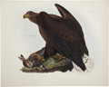 Antiques:Posters & Prints, Prideaux John Selby (1788-1867). Cinereous Sea Eagle, Female -Plate III....