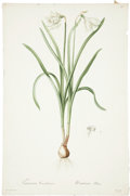 Antiques:Posters & Prints, Pierre-Joseph Redouté (1759-1840). Three Prints: Narcissus Candidisimus. [and:] Phalangium Liliastrum. [and:] Gladiolu... (Total: 3 Items)