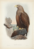 Antiques:Posters & Prints, John Gould (1804-1881). Haliaëtus Albicilla.. A hand-colored lithograph of the majestic Sea-Eagle, from Gould's Birds of...
